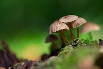 Kleine Gruppe Pilze im Wald