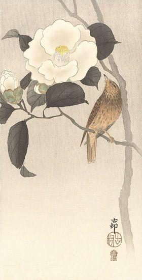 Zangvogel en bloeiende camellia