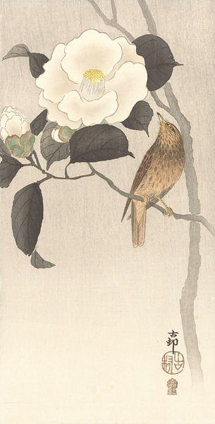 Zangvogel en bloeiende camellia van Gave Meesters
