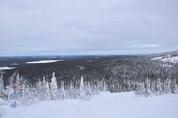 bossen rondom Salla ski risort van Jeroen Franssen