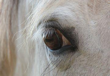 Paardenoog schimmel von Ilona Bredewold
