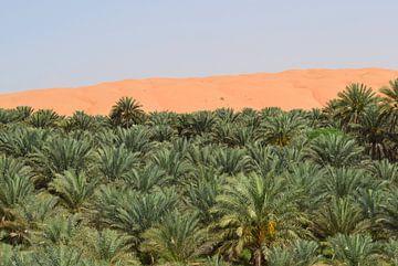 Düne im Oman von Sallys World