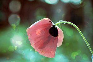 Lueurs florales