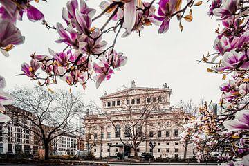 Alte Oper Frankfurt, Magnolien von Fotos by Jan Wehnert