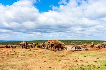 Olifantenkudde in Addo Elephant Nationaal Park van Easycopters