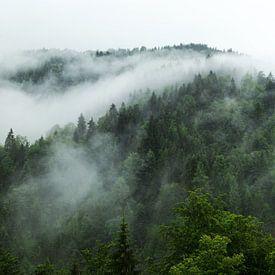 Waldlandschaft mit Nebelfluss von Oliver Henze