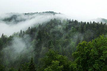 Boslandschap met mistrivier van Oliver Henze