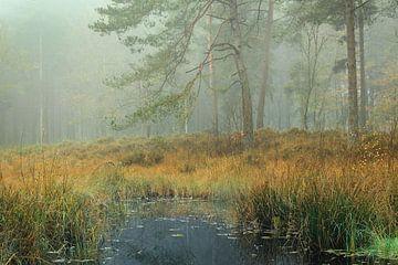 Herfst naaldbos in de mist