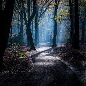 Geisterwald 4 von Nuance Beeld