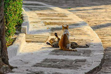 Streunende Katzen auf Samos Pythagorion von Patrick Löbler