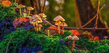Paddenstoelen in het bos van Han Kedde
