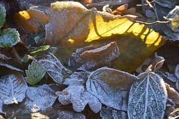 bevroren herfstblaadjes in de zon van Clementine aan de Stegge