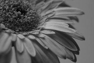 Black Flower von Chantal Nieuwenhuizen