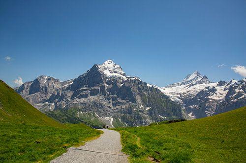 Grindelwald First mit Wetterhorn