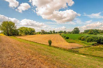 Kleurrijk Nederlands landschap in de zomer van Ruud Morijn