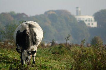 Koe in de Wageningse uiterwaarde van Jelle Eisma
