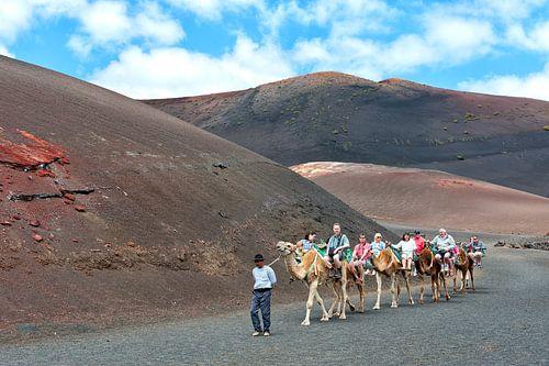 Camel caravan with tourists in Lanzarote island. Spain. van