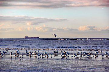 Katwijk aan zee serie - Schip aan de horizon van Wilma Overwijn