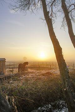 Guten Morgen Sonnenschein von Dirk van Egmond