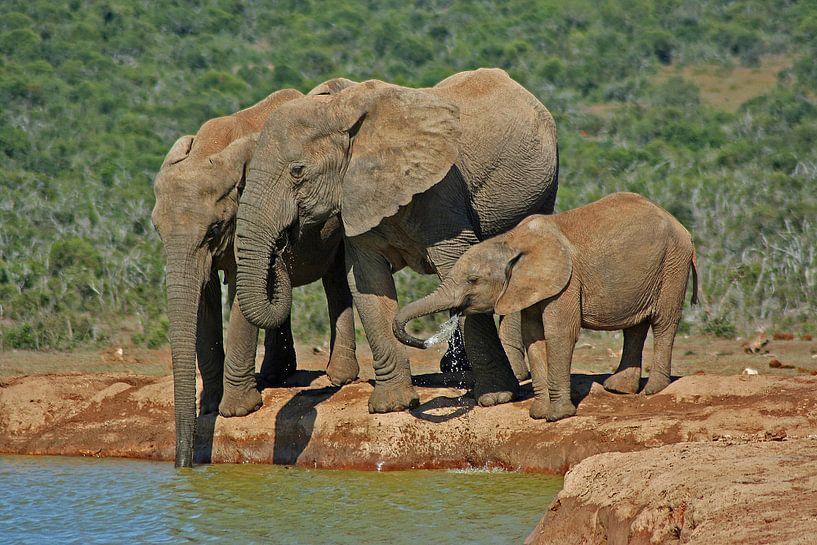 Elephants van Manuel Schulz