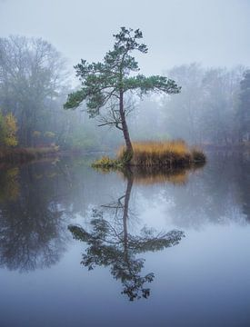 Baum Reflexion in einem Teich von Dennis Mulder