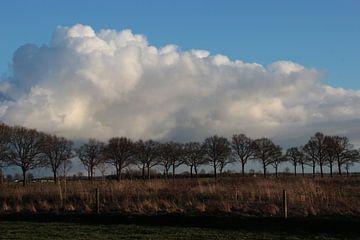 Land, lucht, zon en bomen van Ilona Bredewold