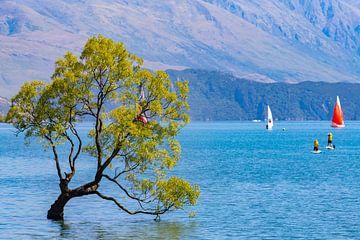 Magische boom, Lake Wanaka van Willem Vernes