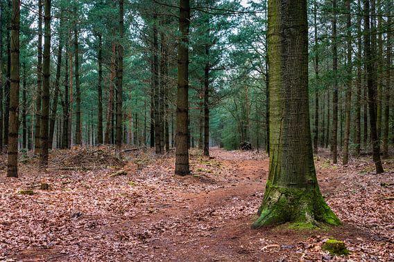 The Forest  van William Mevissen