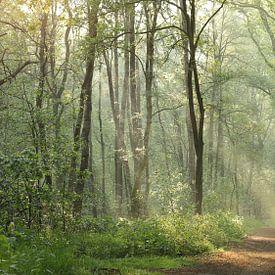 forêt de conte de fées sur Art Wittingen