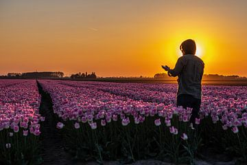 Sonnenuntergang über Tulpen von Michael Verbeek