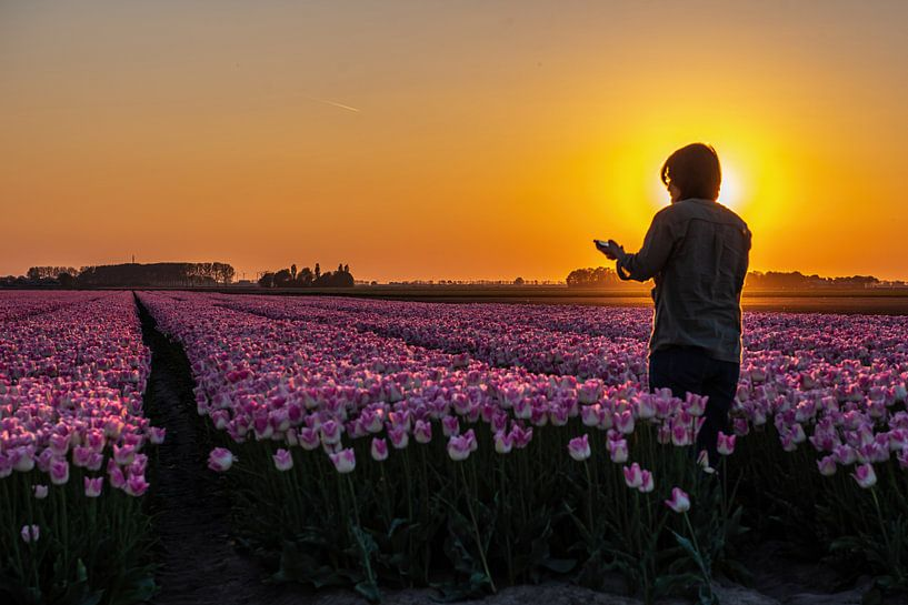 Zon's ondergang boven Tulpenin Flevoland van Michael Verbeek