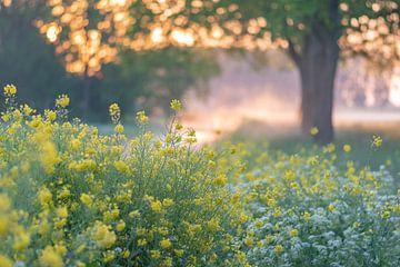 lentebloemen in de ochtend van Tania Perneel