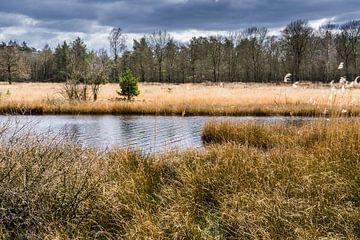 Meer in natuurgebied Kootwijkerzand van Tessa Louwerens