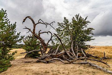 Krüppelholz von Aad de Vogel