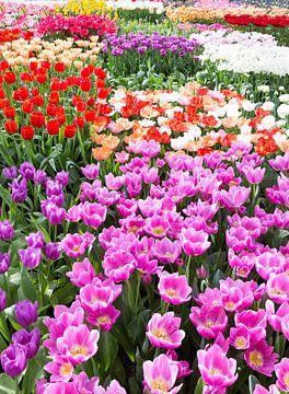 Bloemenveld met verschillende kleuren bloemen van