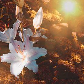 Zarte  Lilien von Claudia Evans