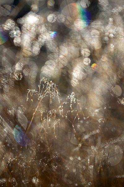 gras in tegenlicht van Ronald Jansen