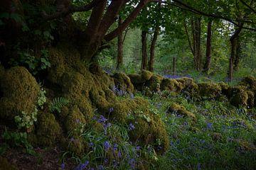 Forêt de conte de fées en Irlande 2 sur Bo Scheeringa Photography