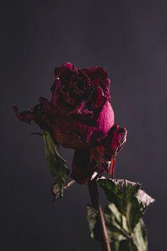 Rode roos van Marie Ndiaye