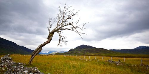 Eenzame boom in Schotse glen van