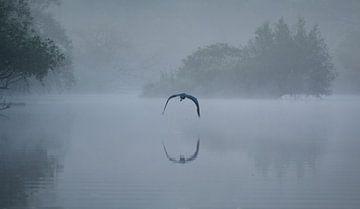 Reiher im Nebel von René van der Horst