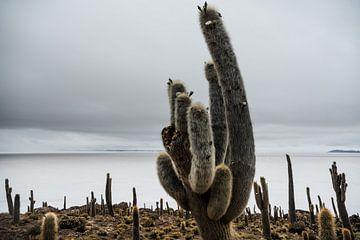 Cactus in Salar de Uyuni van
