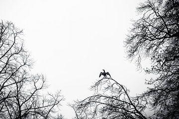 aalscholver die op een hoge boomtak zit te zonnebaden van Margriet Hulsker