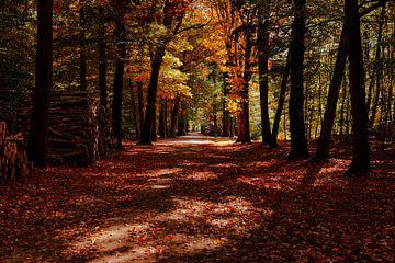 Mastbos herfstkleuren van Björn van den Berg