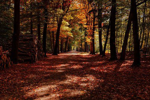 Mastbos herfstkleuren
