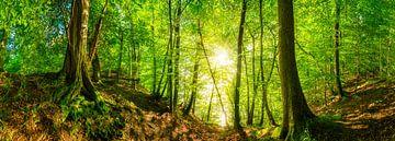 Wald Panorama mit leuchtender Sonne von Günter Albers
