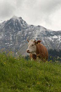 Koe op de heuvel