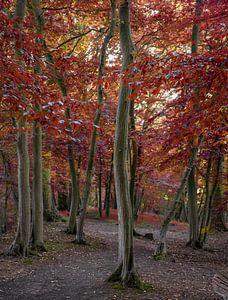 Wandelpad door het herfstbos, Engeland van