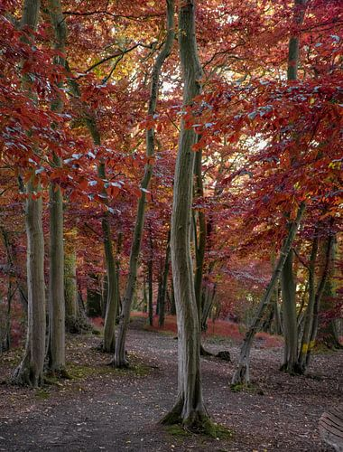 Wandelpad door het herfstbos, Engeland