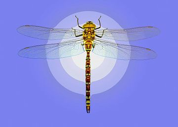 Dragonfly van Leopold Brix